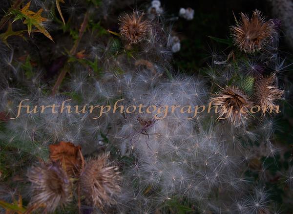 Nature's Paintbrush VIII