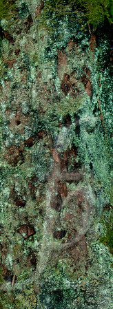 Woodland Art VIII