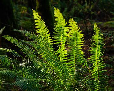 Glowing Ferns