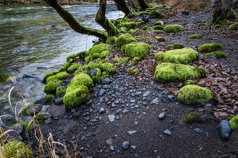 Mossy stones along the river in winter.