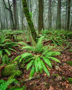 Winter ferns