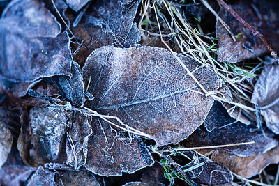 Frost on Forest Floor
