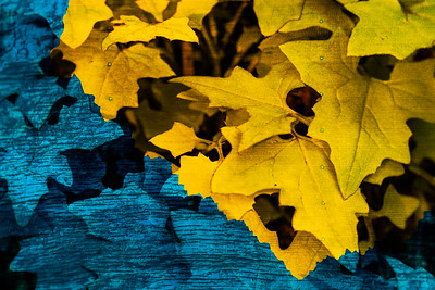 Two contrasting wood grains and added blue and yellow colors.