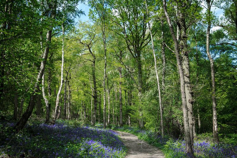staffhurst woods-2-11.jpg