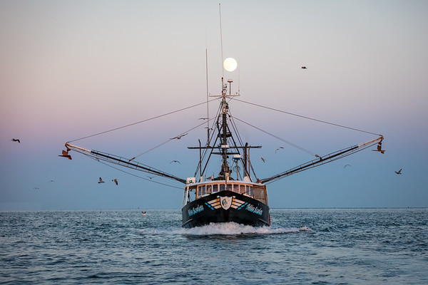 Sea Harvest Moon