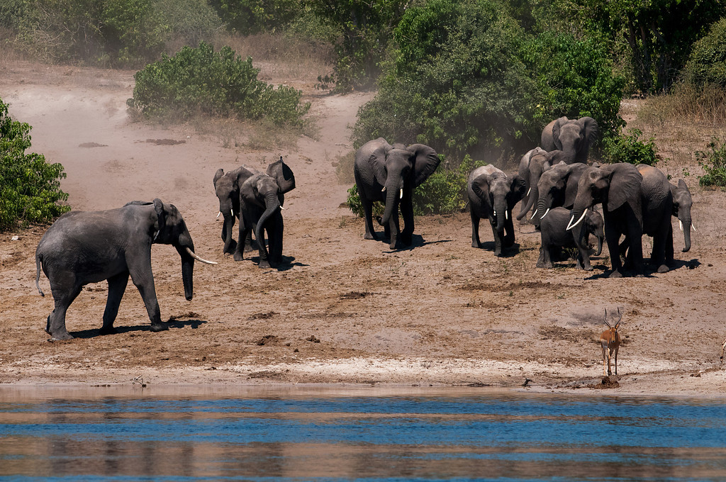 On my last day on the river I saw lots of elephants.