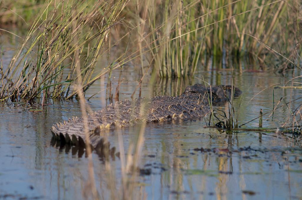 You had to be leery of the crocodiles