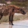 The hyenas were the most sinister looking.
