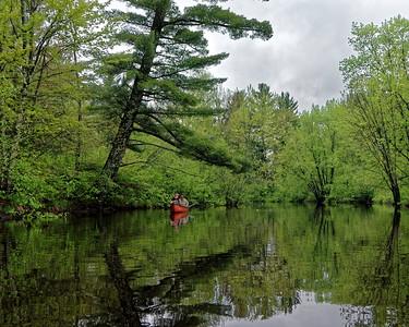 White Pine...Red Canoe