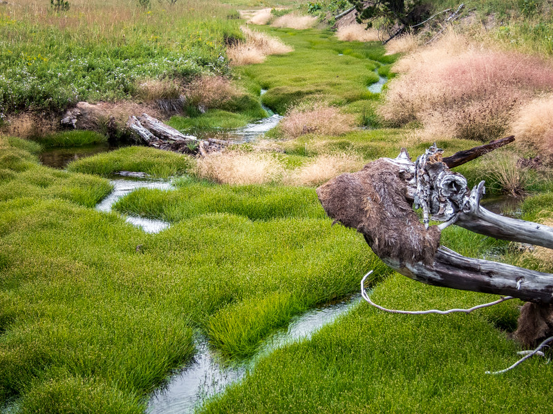 Creek, Yellowstone National Park