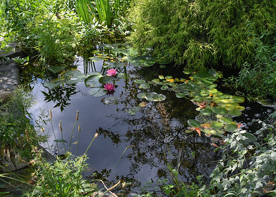 Lower Pool in Second Pond Off Side of House - August 8, 2020 I love the sound of running water.