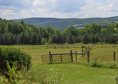 Backyard and Lower Horse Pastures - August 8, 2020