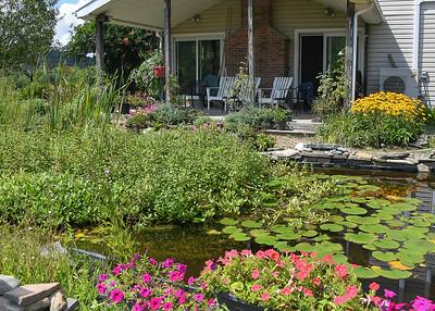 Main Pond Off Porch - August 8, 2020