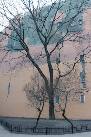 Tree's pattern