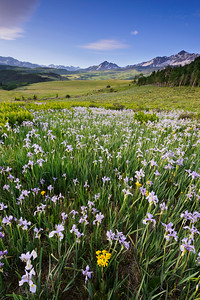 """Iris Sunrise"" - near Telluride, CO"