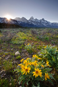Sunburst in the Tetons