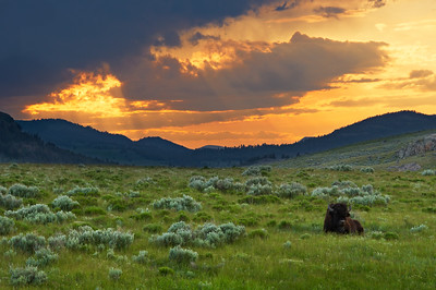 """Clairvoyance"" - Yellowstone National Park, Wyoming"
