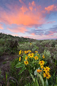 """Balsamroot Sunrise"" - Grand Teton National Park, WY"