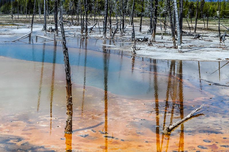 Stump Reflections