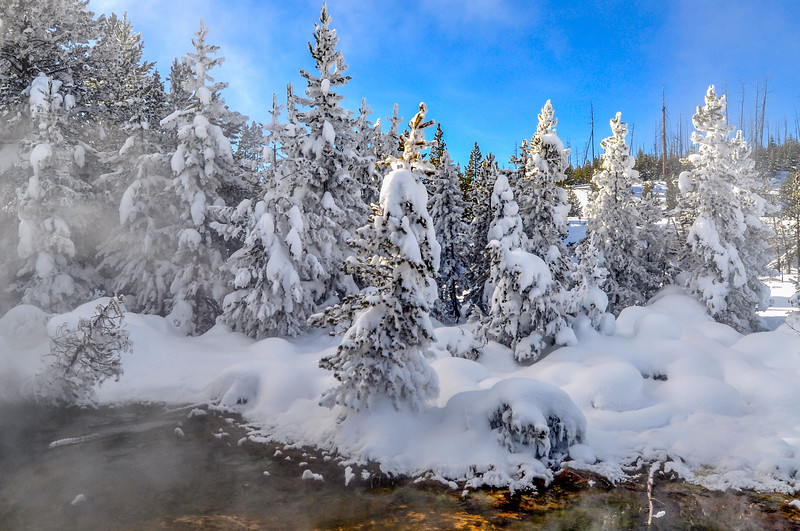 Yellowstone Frozen Forest