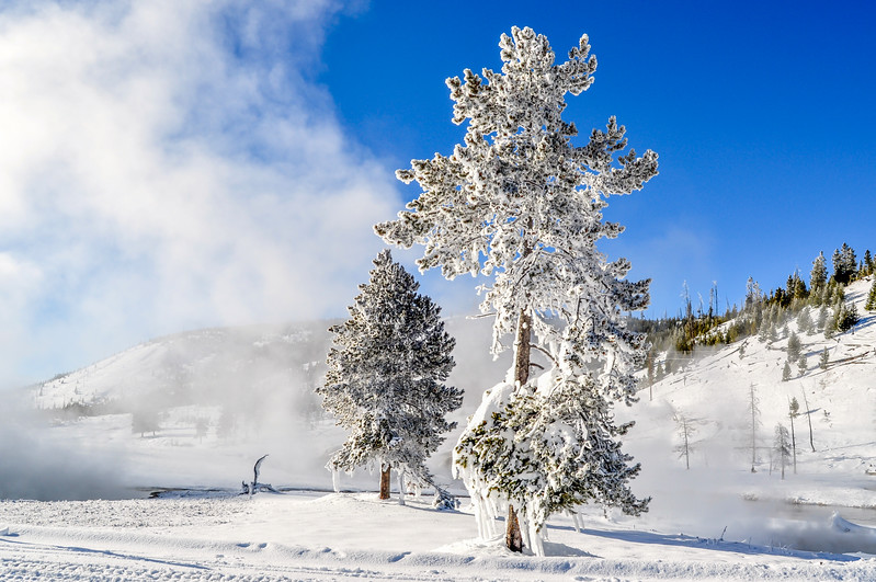Shining Ghost Trees