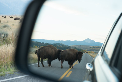 yellowstone-teton-6638