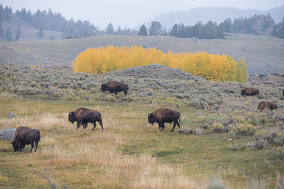 yellowstone-teton-5983