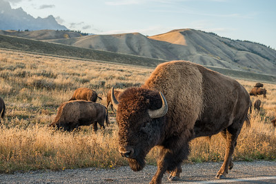 yellowstone-teton-6572