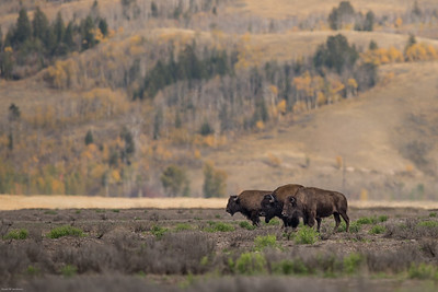 yellowstone-teton-2614