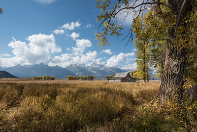 yellowstone-teton-2590