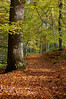 Strid Wood, Wharfdale