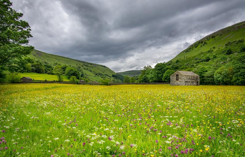 Wildflower meadows, Muker, Swaledale