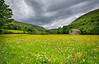 Wildflower meadows, Muker, Swaledale