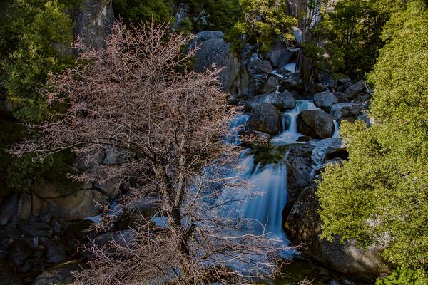 Light, Tree, and Falls