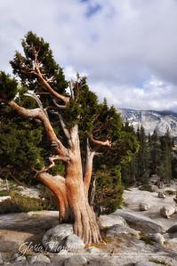 Yosemite_DSC0028