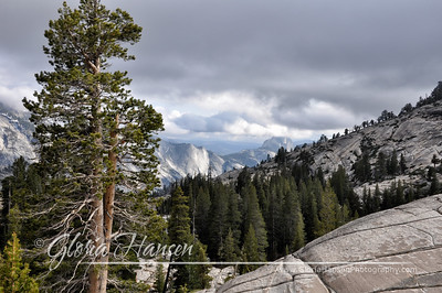 Yosemite-landscape_DSC0036