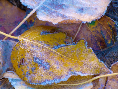 First Frost