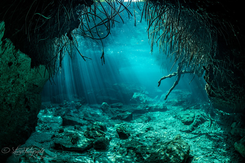 Below the mangroves I - Casa Cenote, Quintana Roo, Mexico 2019