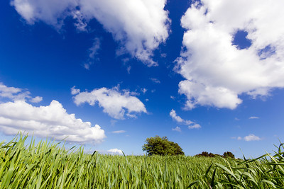 landscape of a field with grass and clouds
