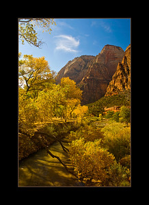 Cottonwoods showing their colors, Zion National Park, Utah
