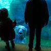 Polar Bear Underwater, Brookfield Zoo, Brookfield Illinois