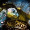 Turtle, Peoria, Zoo, Peoria, Illinois