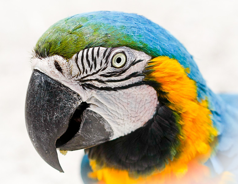 Parrot, St. Maarten Zoo