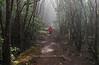 Misty forest hike<br /> Kauai