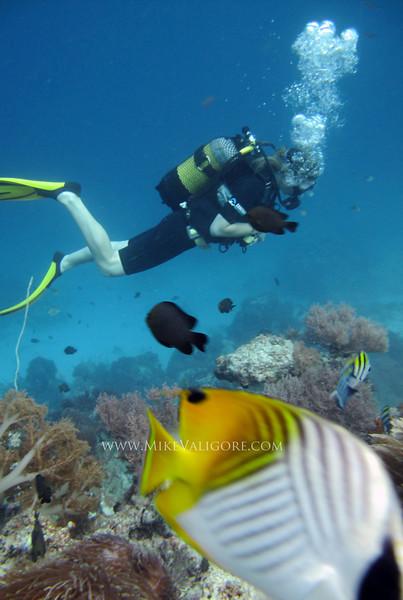 Diver and Butterflyfish<br /> Zanzibar