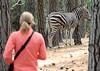 Hiking with zebras<br /> Franschhoek, South Africa