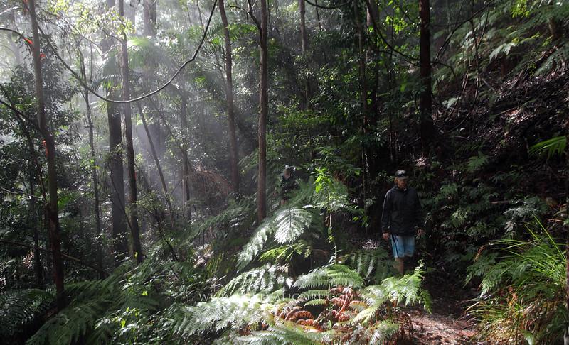 Coastal rainforest<br /> Byron, NSW