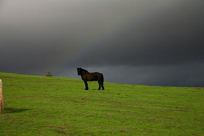 _rainbow033