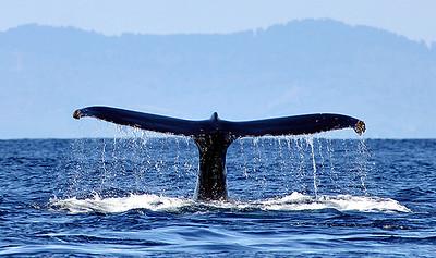 whale-tail-2, half moon bay,calif