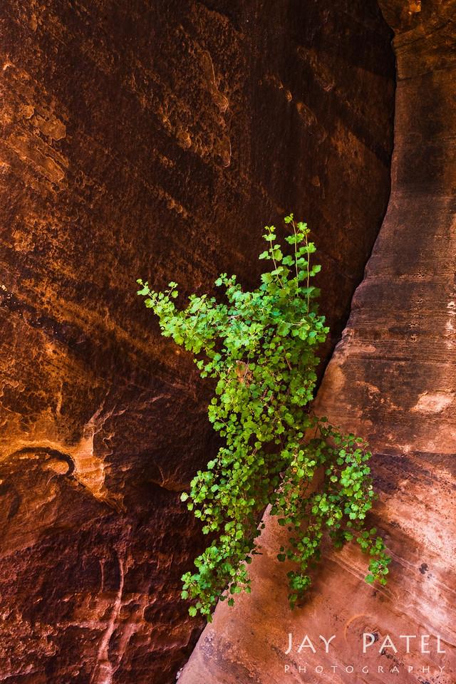 Buckskin Gulch, Vermilion Cliffs, Arizona (AZ), USA